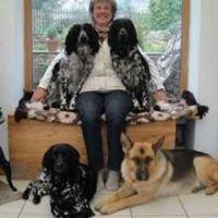 Crumpsbrook German Shepherd Dogs & Large Munsterlanders