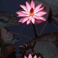 The Lotus Rooms - Croydon