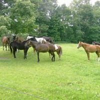 Double L Stable Equine Rescue and Sanctuary