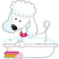 Shampoodles Pet Spa 423-314-4749