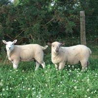 Hazelwell Farm