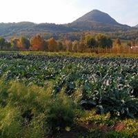 L'orto del sole di russo davide  frutta e verdura biologica