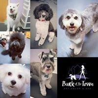 Bark of the Town Pet Salon & Spa