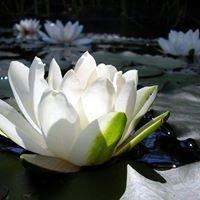"""White Lotus Serenity - """"Soul Healing"""""""