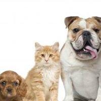 Bonny Hills Veterinary Clinic