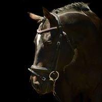 Northland Equestrian