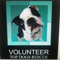 Top dogs Rescue