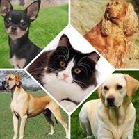 Jackson Creek Veterinary Clinic
