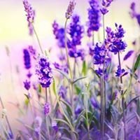The Lavender Market