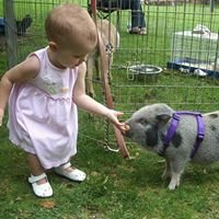 Cindy Lu's Petting Zoo - My Kids' Mom Farm