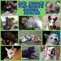 2nd Chance Fur-Babies Animal Rescue