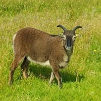 Fernbourn Fleeces