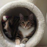 Benicia Cat Clinic Adopt-A-Cat Page