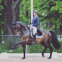 Segersta Equestrian
