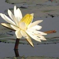 Mindfulness in Cork - Suaimhneas Mindfulness