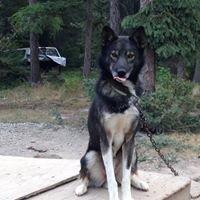 Winter Woods Dog Sled Tours