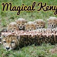 Kilimanjaro Exotic Adventures and Safaris
