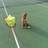 Cramlington Community Tennis Programme