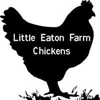 Little Eaton Farm Chickens