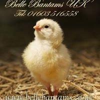 Belle Bantams