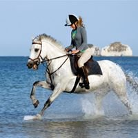 Horses at John Harding's Studland Photography