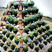 Agricultura Urbana y Productos Regionales de Oaxaca