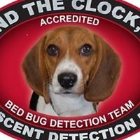 Toby The Bed Bug Dog Inspector
