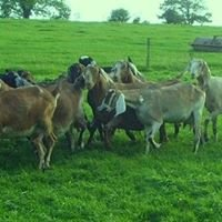 Orchard Cottage Dairy Farm