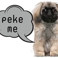 Pekingese Rescue of South Africa