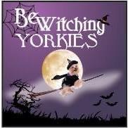 BeWitching Yorkies & SACBR Registered Breeder