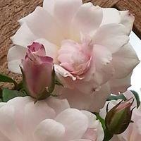 Rose Arbor Soaps LLC