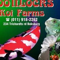 Loolilocks Koi Farms