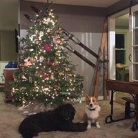 Luchsinger's Christmas Trees