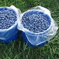 Prelock Blueberry Farm