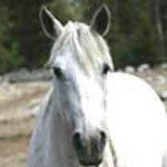 All Mosta Ranch Montana