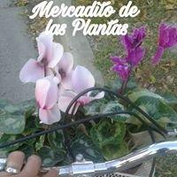 Vivero Mercadito De Las Plantas