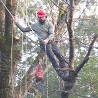 Black Bear Tree, Land & Forest