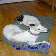 Montville Animal Hospital