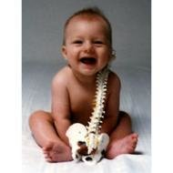 Dr Janette McCormick - Pregnancy & Paediatric Chiropractor
