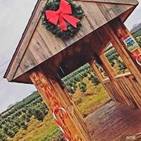 Dzen's Christmas Trees