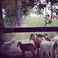 Wild Oats Ranch