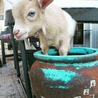 Wild Vine Dairy Goats