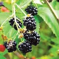 Wild Berry Health Foods