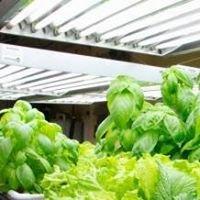 Bustan Urban Gardening Essentials, Toronto Hydroponics