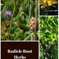 Radicle Root Herbs