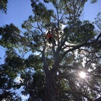 Cochrane tree services