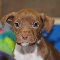 Henderson County Animal Shelter