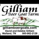 Gilliam Boer Goat Farms