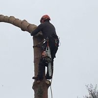 S.H. Tree Services
