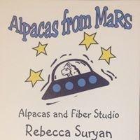 Alpacas from MaRS